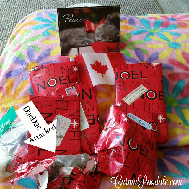 red and white wrapping paper on cat presents from Canada for santaPaws