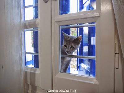 szrobury kot spogląda zza okna przez szybę