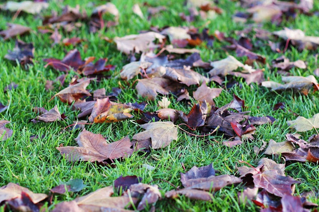 Regent's Park in Autumn - London lifestyle blog