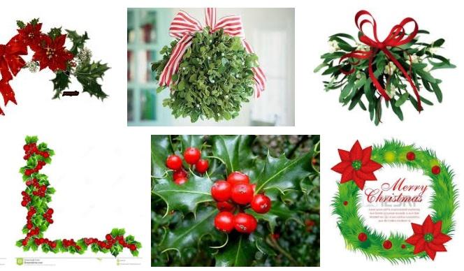 Regalare Vischio a Natale: proprietà, benefici e alcune controindicazioni