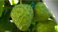 gambar buah cherimoya