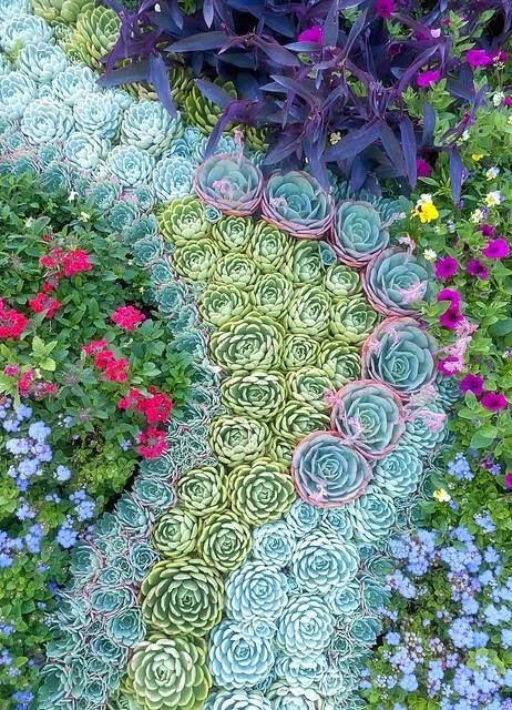 a beautiful landscaping of succulents that look as if to form a river