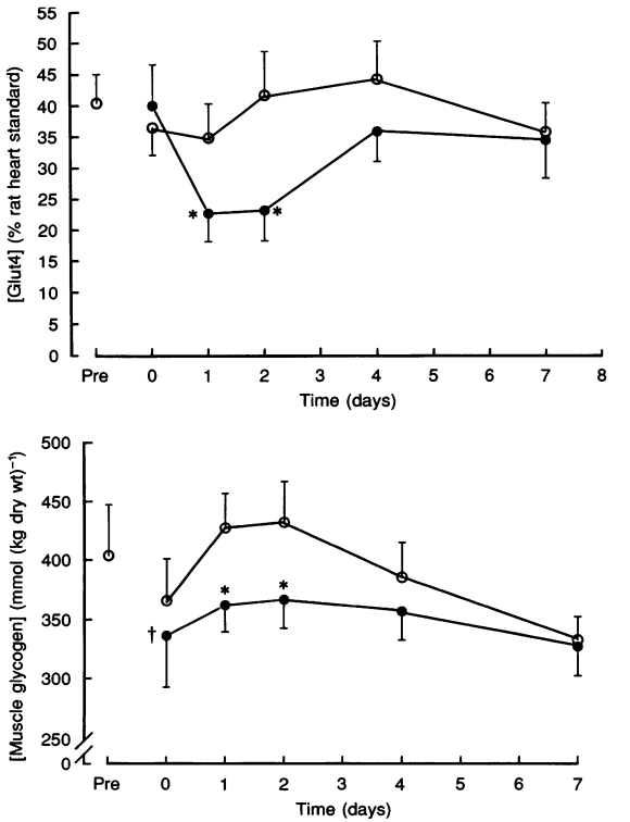 high rates muscle glycogen resynthesis after exhaustive exercise Of muscle glycogen resynthesis after exhaustive exercise when carbohydrate is coingested with caffeine, journal of applied physiology , 105(2008:1), p 7-13.