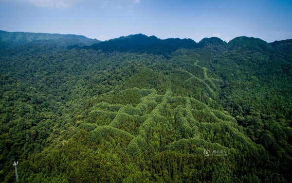 mysterious pattern forest China 3