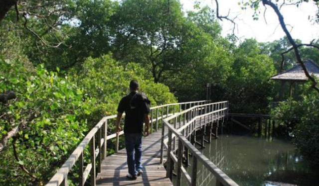 Tips Menelusuri Hutan Bakau di Bali