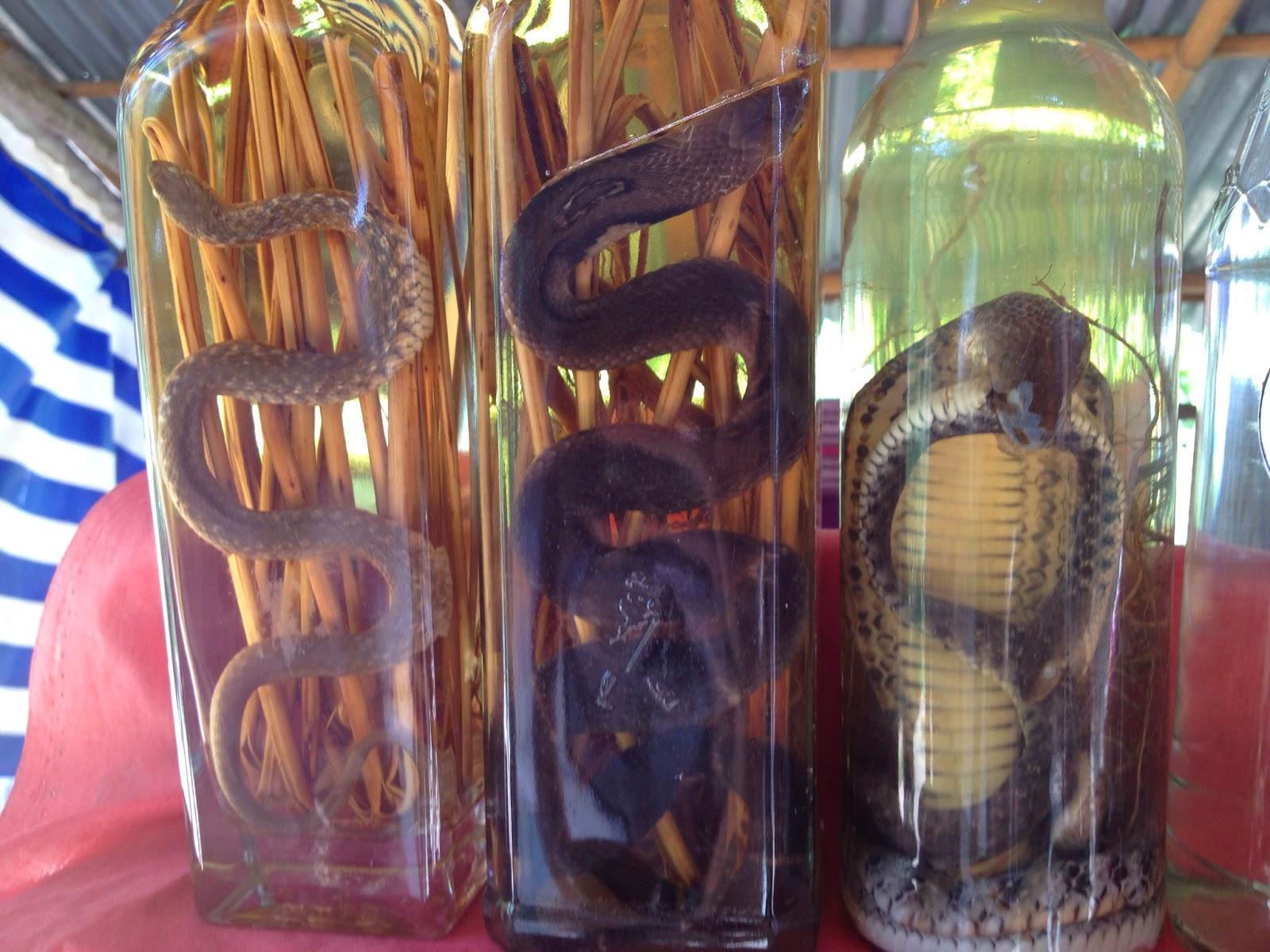 Luang Prabang - Snake wine