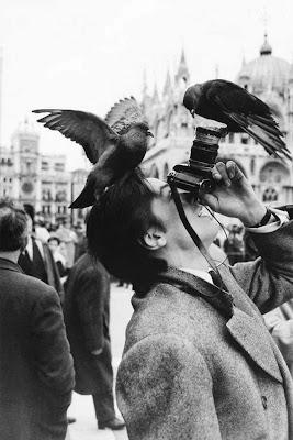 Dos curiosos pájaros en la cabeza de un fotógrafo.