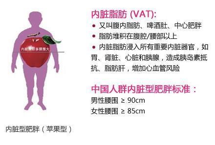 內臟的脂肪最難減。人瘦腰肥的人要注意了! - 穴道經絡引導