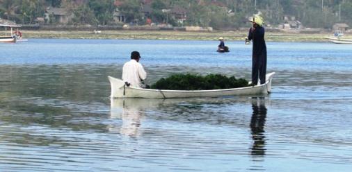 Nusa Lembongan mangrove Snorkeling the Best off beach snorkeling in Bali , Drift Snorkeling Nusa Lembongan