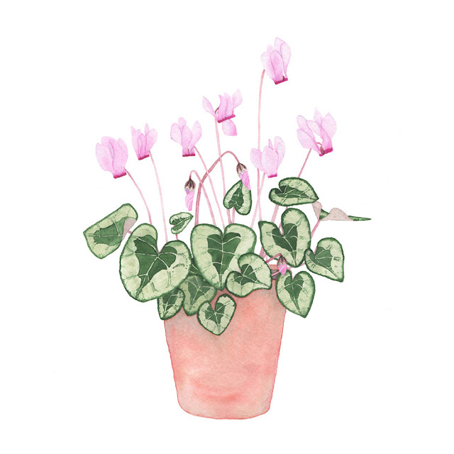 Botanical watercolor painting pink cyclamen