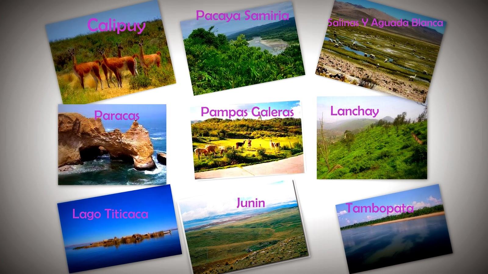 Flora Y Fauna Del Perú: ECORREGIONES Y ECOSISTEMAS DEL PERÚ: Noviembre 2013