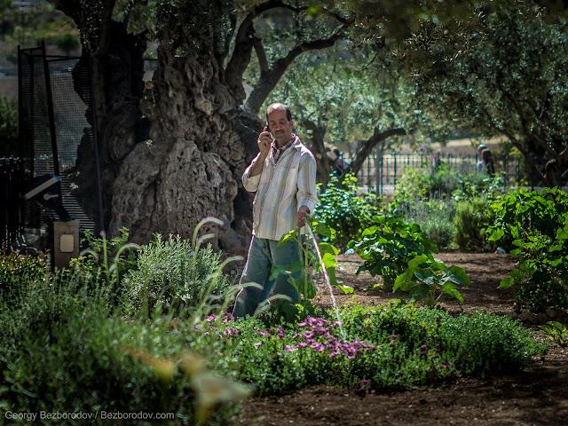 """""""В Гефсиманский сад требуется садовник..."""""""