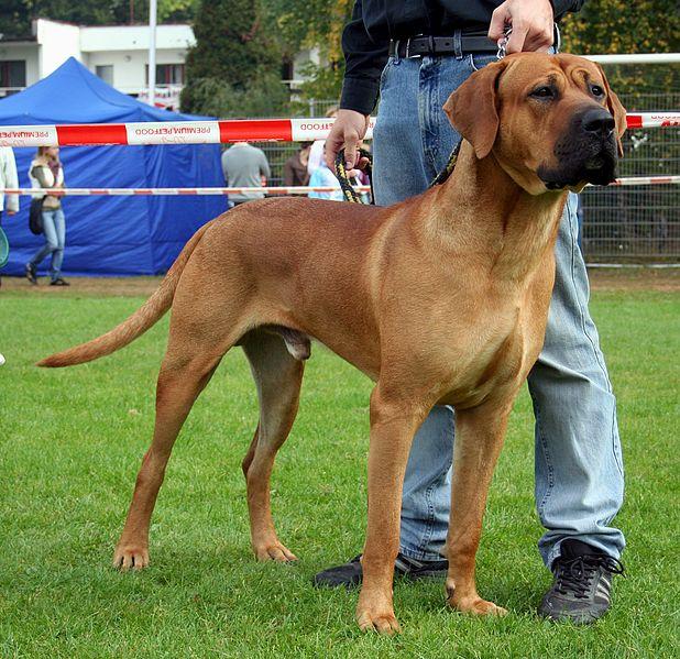 ये हैं दुनिया के सबसे खतरनाक कुत्ते, ले सकते हैं किसी की भी जान | Strongest Dog Breeds in the World