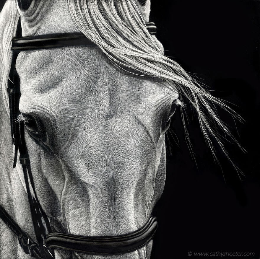 04-White-Horse-Cathy-Sheeter-Wildlife-Scratchboard-Drawings-www-designstack-co