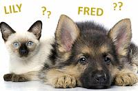 Nomes para Animais