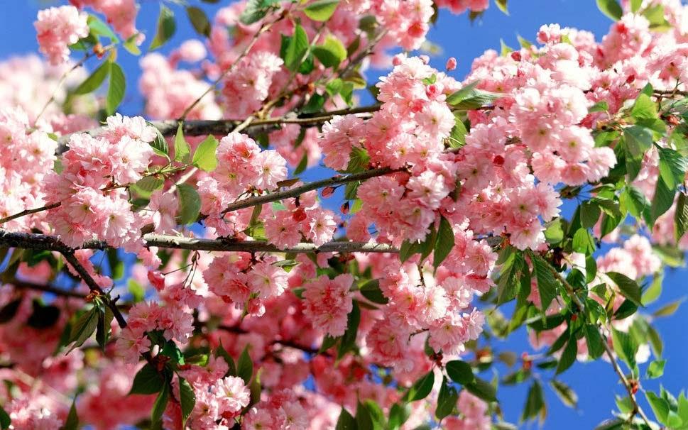 summer-bloom-screen-savers-wallpaper