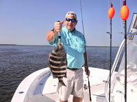 Biggest Sheepshead 2016