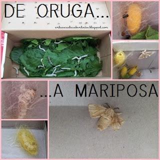 En La Escuela Caben Tod At S Proyecto De Oruga A Mariposa Con La