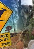 Wild Frank Australia Temporada 1