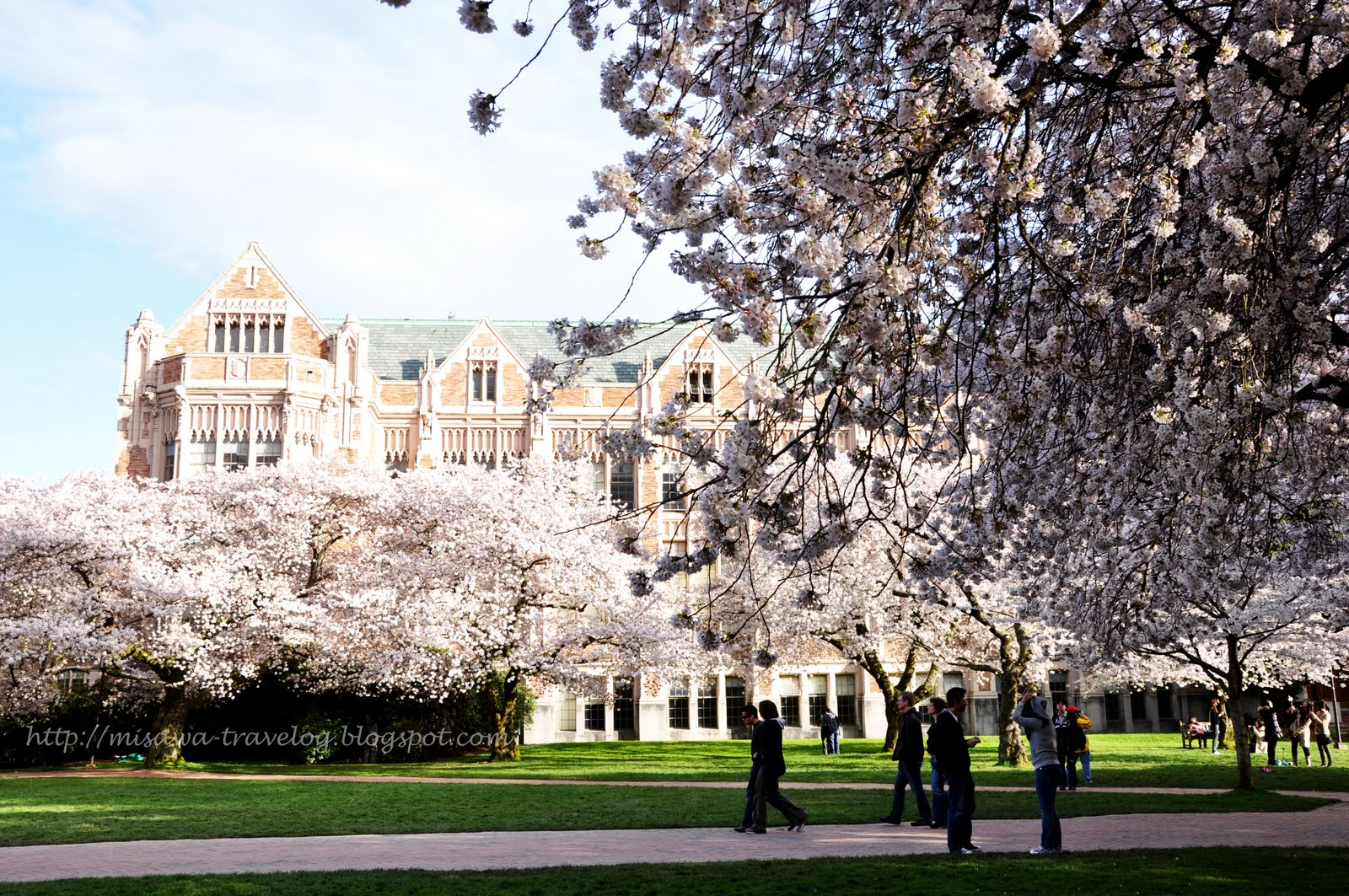 TRAVELOG: Cherry Blossoms at University of Washington