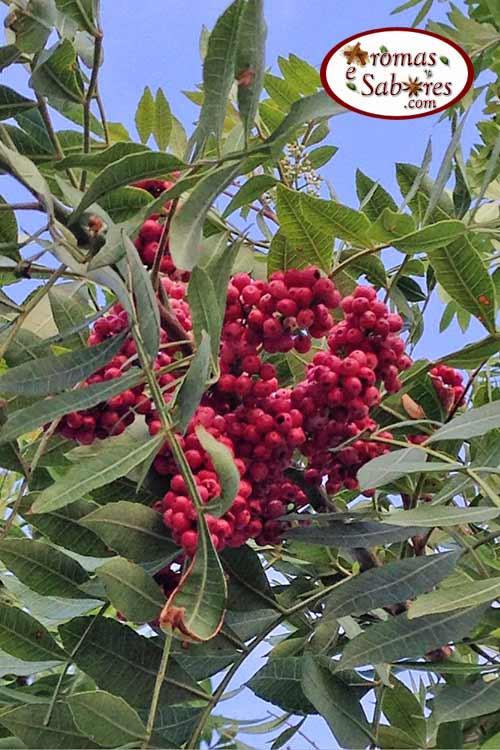 Pimenta rosa do blog Aromas e Sabores