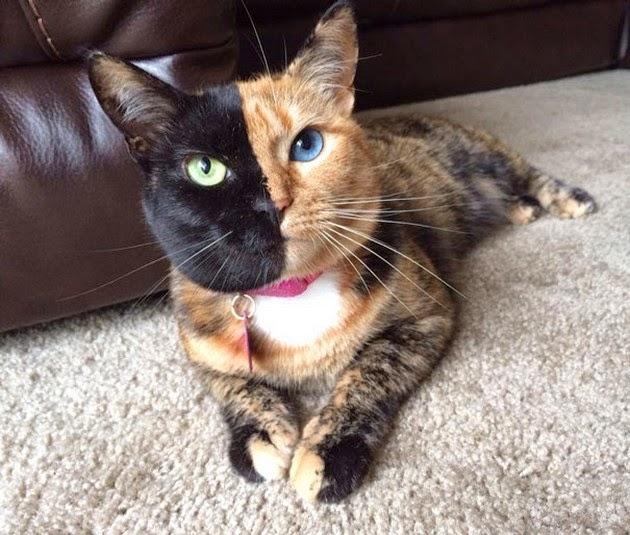 beautiful-cat-2