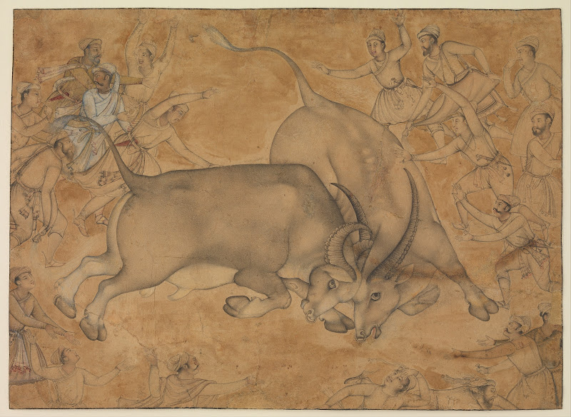 Buffaloes in Combat, Mughal Painting,  Late 16th Century