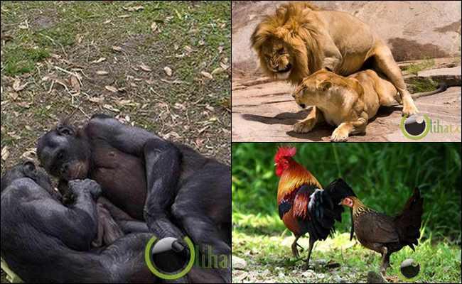 10 Binatang yang Hobi Bertukar Pasangan