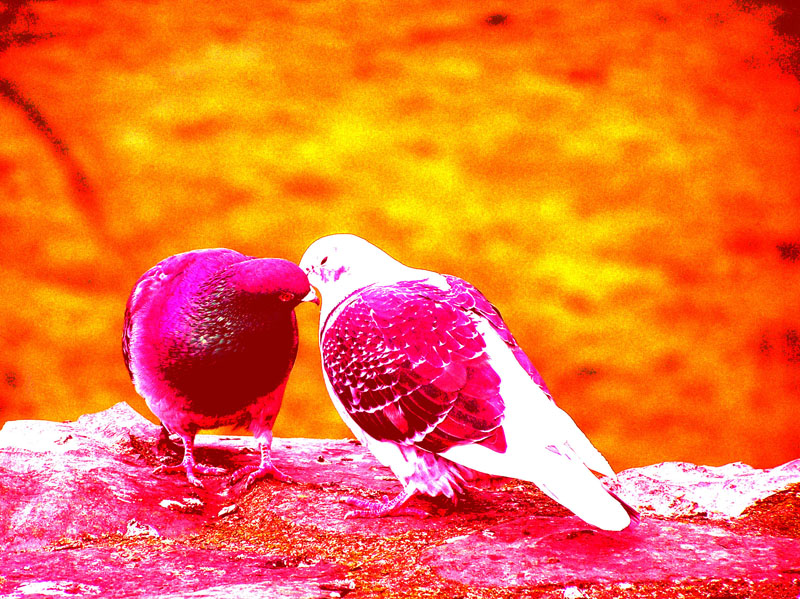 HD WALLPAPERS: Love Birds