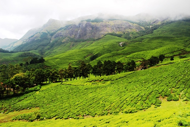 Ideal trekking spot Kolukkumalai tea plantation  Munnar Hill Station Kerala Pick, Pack, Go