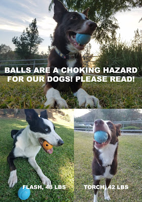 Get your dog a bigger ball!