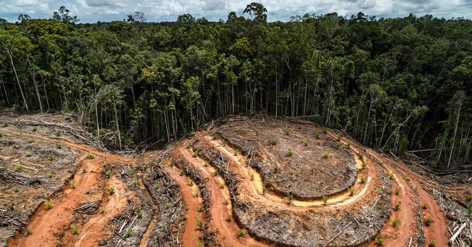Revealing Video By Greenpeace International Raises Awareness Of Massive Deforestation In Indonesia