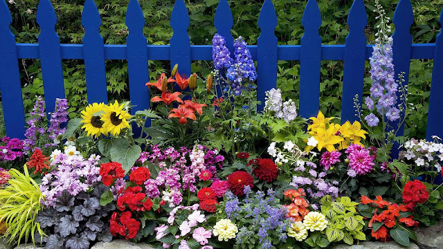 Foto van prachtige gekleurde bloemen