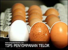 Tips Waktu dan Cara penyimpanan Telur yang baik