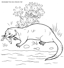 Wild Otter - Coloring Page Animal