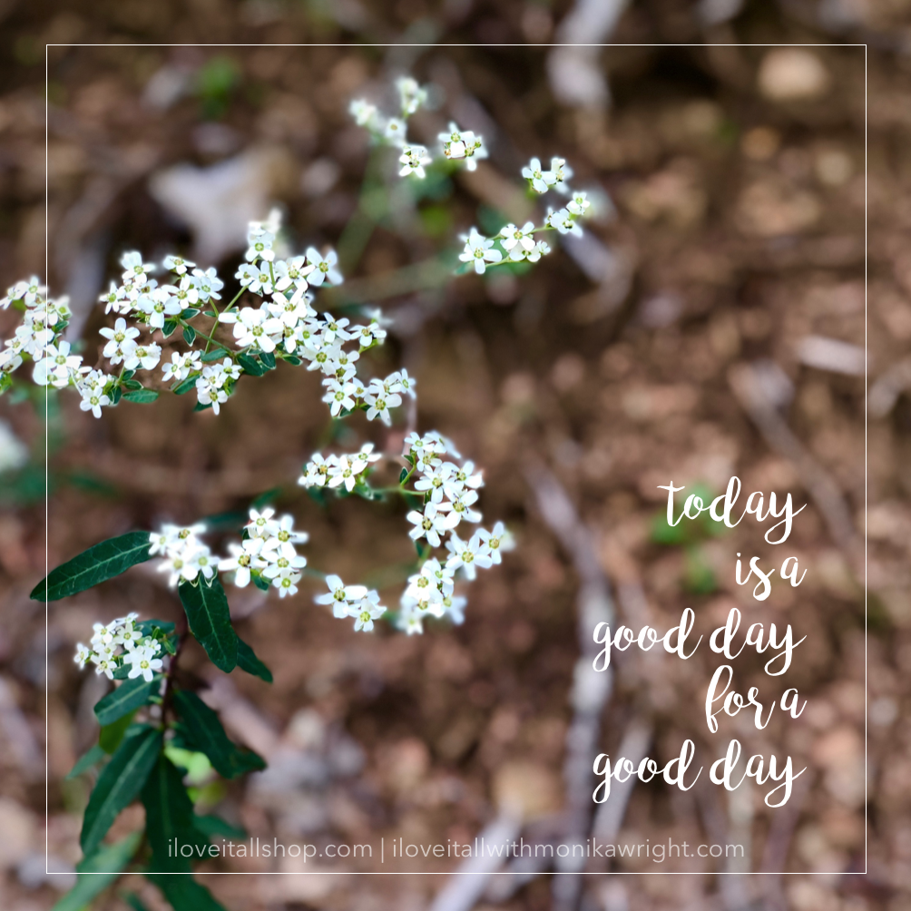 #good day #today #today is a good day #photography #nature #white flowers #motivation #quotes