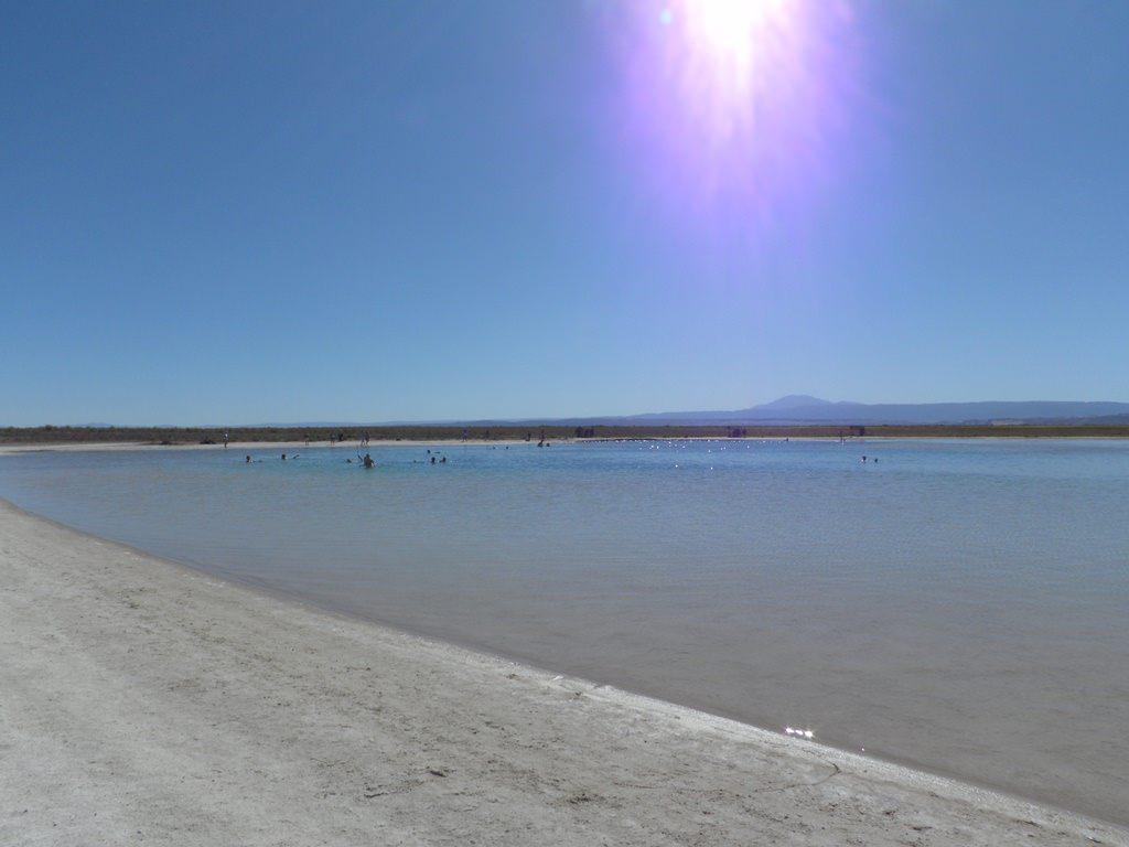 Laguna Cejar no Atacama