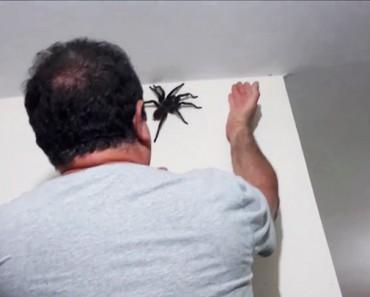 Il découvre une araignée géante dans sa maison