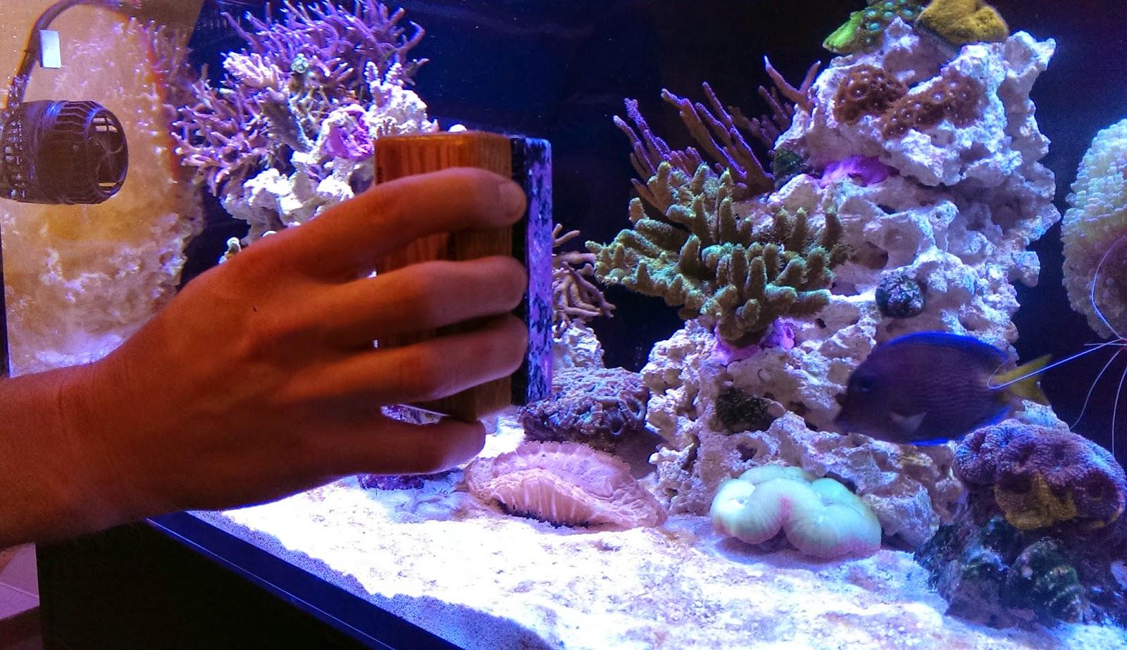 Brown Flat On Aquarium Glass