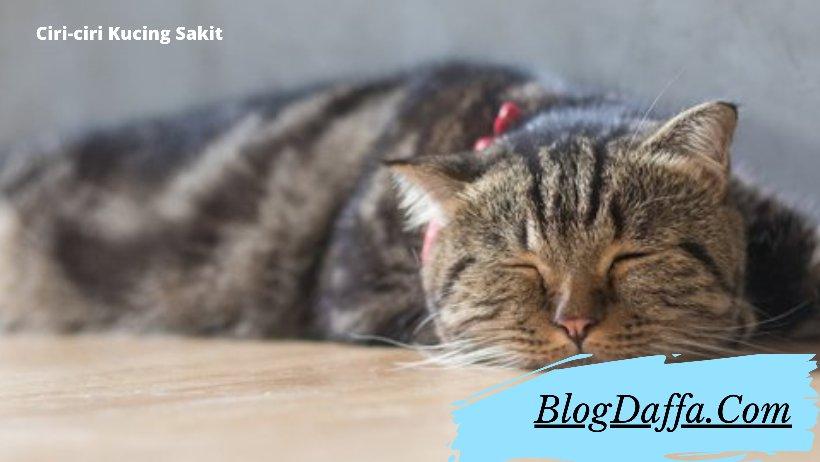 Ciri Ciri Kucing Sakit yang Harus Kamu Ketahui