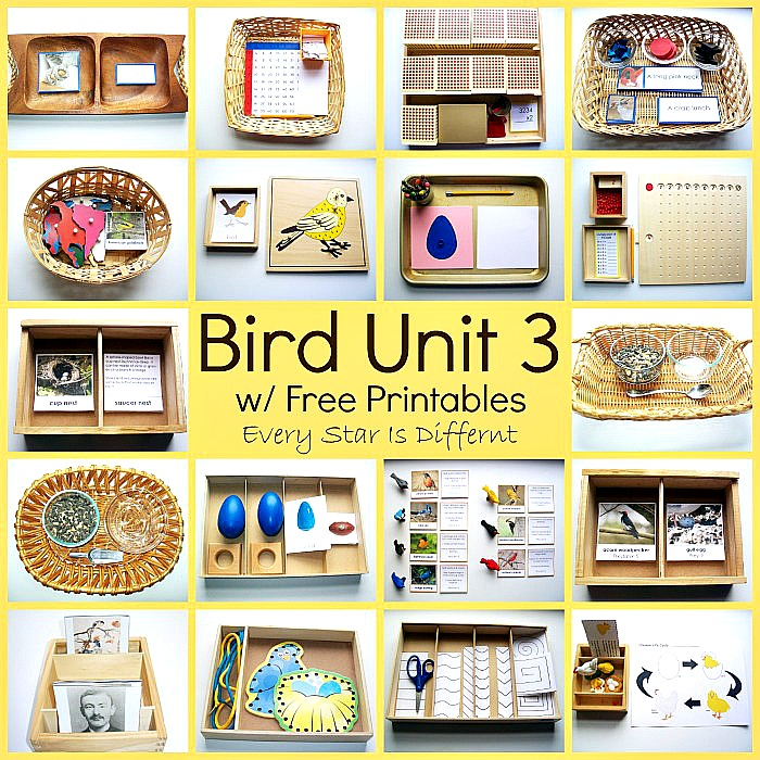 Bird Unit 3
