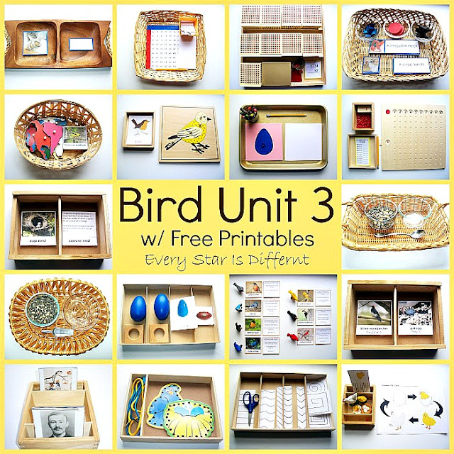 Montessori Bird Activities and Free Printables for Kids