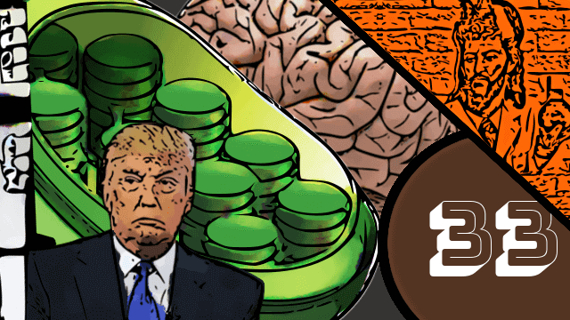 QN NEWS #33 - Cérebros, Insulina e Cloroplastos