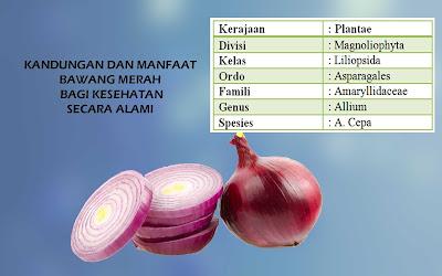 kandungan dan manfaat bawang merah bagi kesehatan secara alami