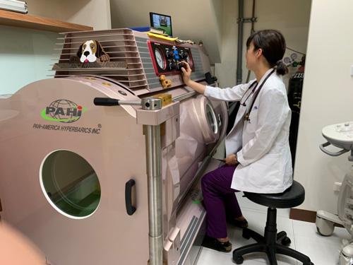 恩澤動物醫院設有大型碳鋼『高壓氧艙』,適合犬貓高壓氧治療。