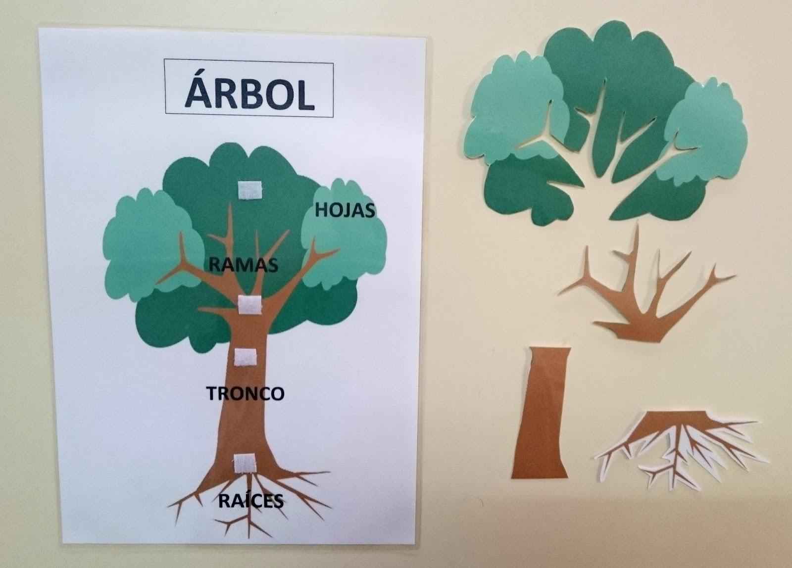 Aula abierta t e a colegio federico de arce mart nez for Un arbol con todas sus partes