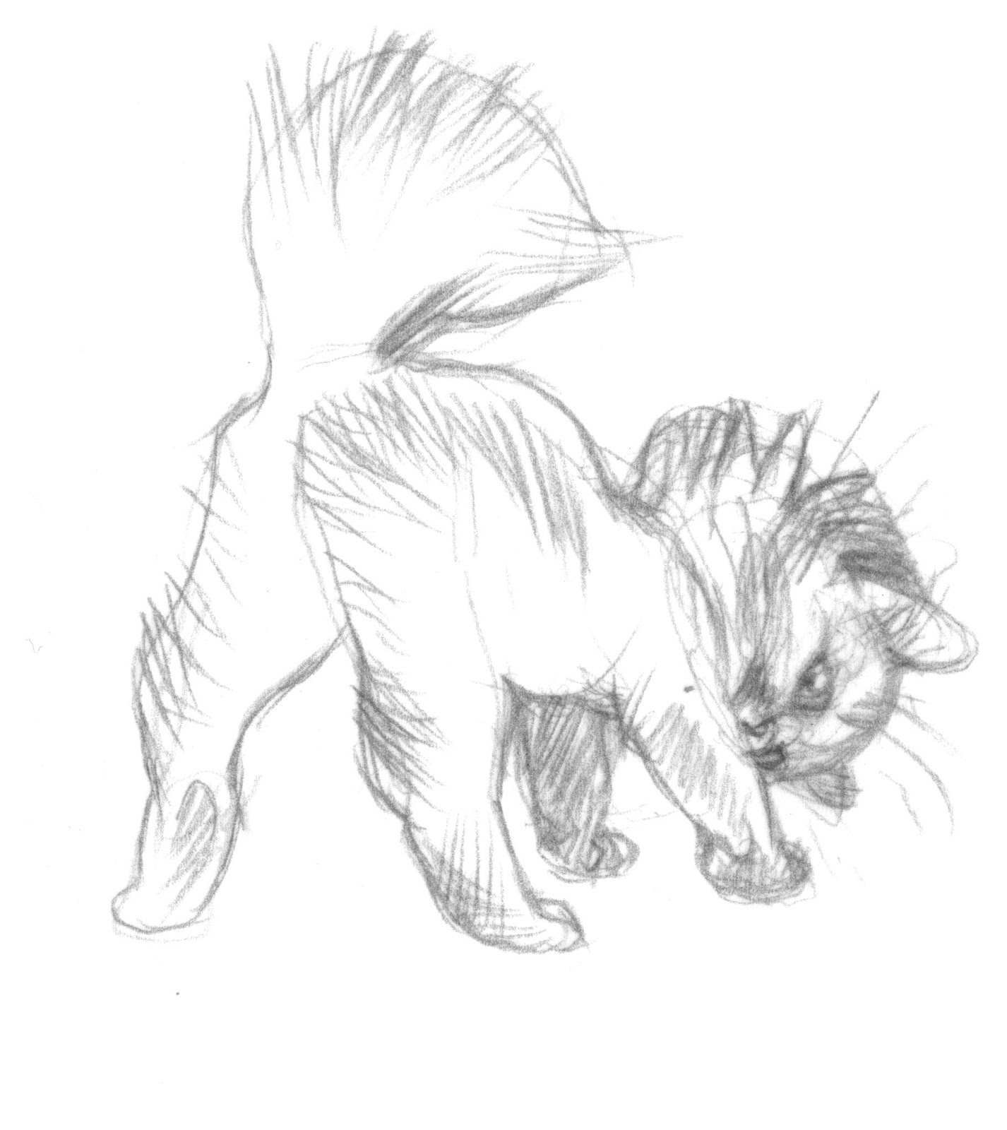 Character And Creature Design Notes Claire Wendling S Cats