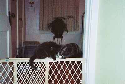 tiny black kitten baby gate