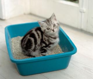Le minzioni inappropriate e le marcature urinarie del gatto