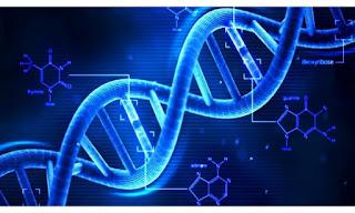 10. Sınıf Biyoloji Palme Yayıncılık Ders Kitabı Cevapları